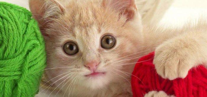 Котёнок с клубками