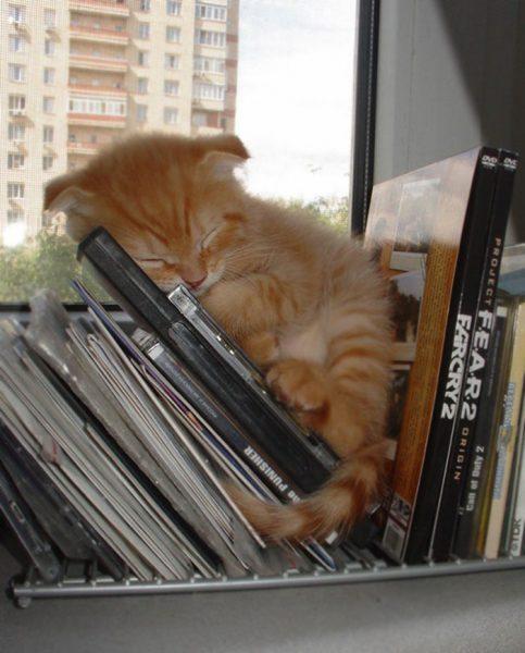 Котёнок спит среди дисков