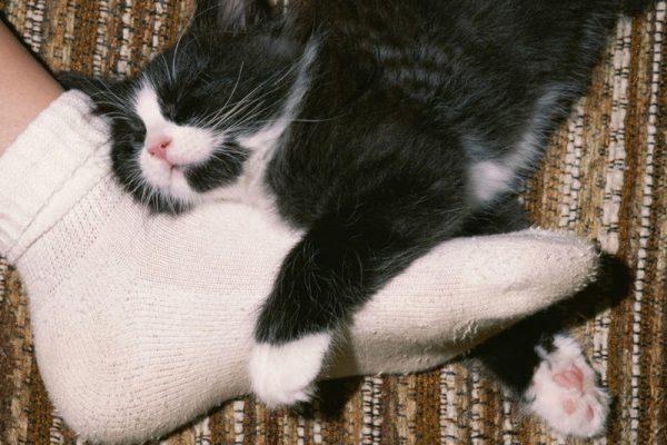Котёнок уснул, обхватив лапами ногу человека
