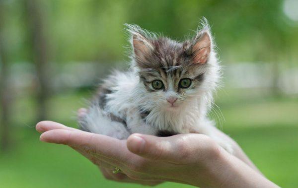 Котёнок в ладони человека