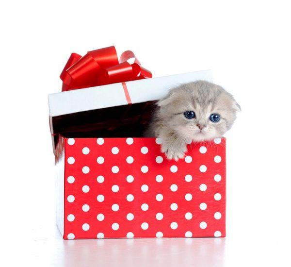 Котёнок в подарочной коробке