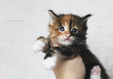 Котёнок в руке