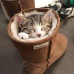 Котёнок в сапоге