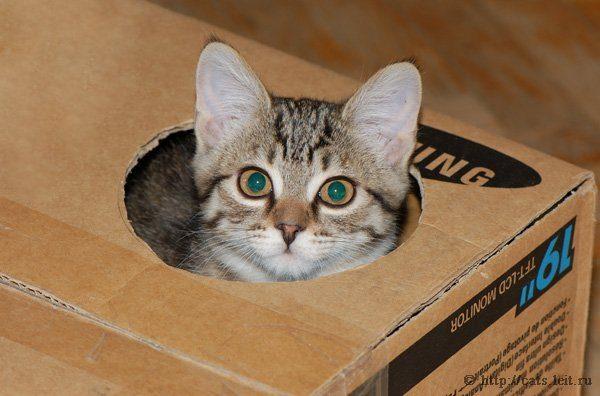 Котёнок выглядывает из коробки