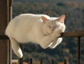 котик спит