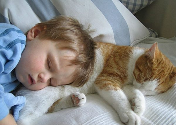 Котик спит рядом с ребёнком