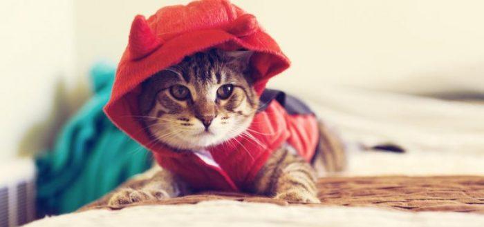 котик в красной толстовке с капюшоном