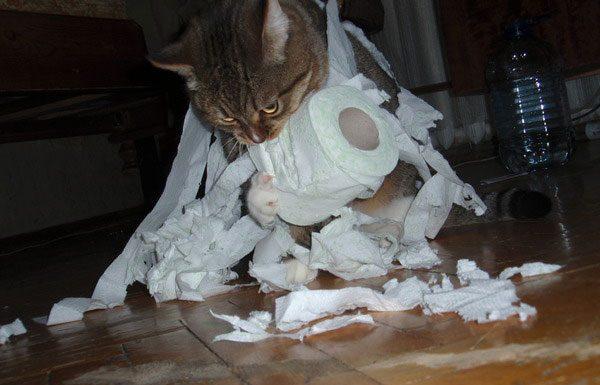 Кот грызёт туалетную бумагу