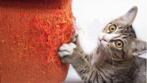 Коты часто дерут мебель