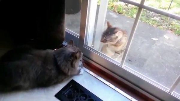 Коты смотрят друг на друга через стекло