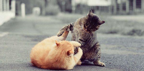 Коты играют на улице