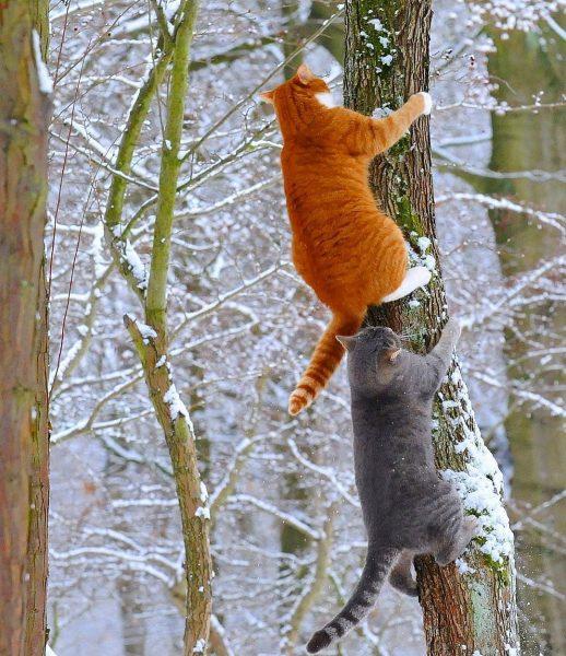 коты лезут на дерево