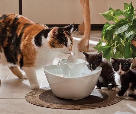 Котята пьют из автопоилки, подражая маме