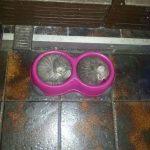 Котята в мисках