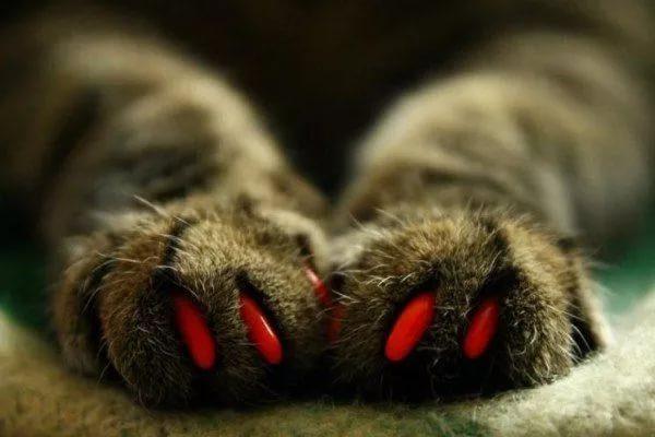 красные колпачки на когтях передних лап