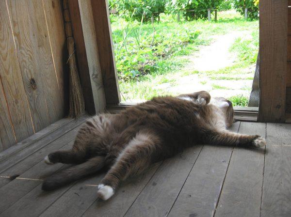 Кот спит на спине