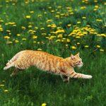 Кот бежит