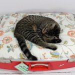 лежанка из половинки чемодана