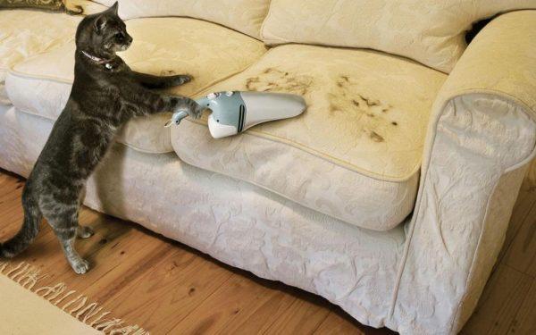 Кошка с пылесосом и шерсть на диване