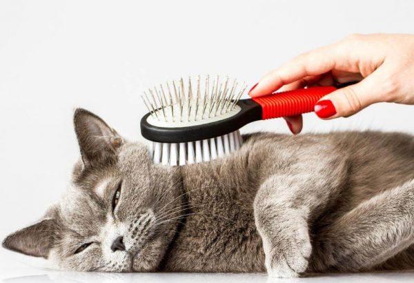 Вычёсывание кошки