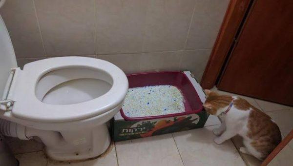 Кошачий лоток в туалетной комнате