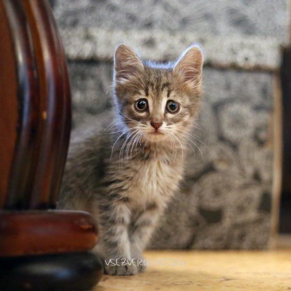 удивлённый котёнок смотрит