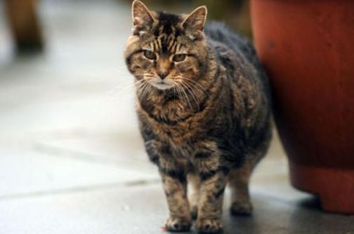 кошка-долгожитель Люси
