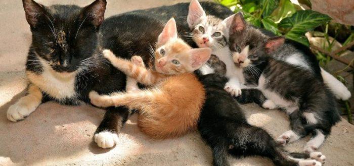Мама-кошка с котятами