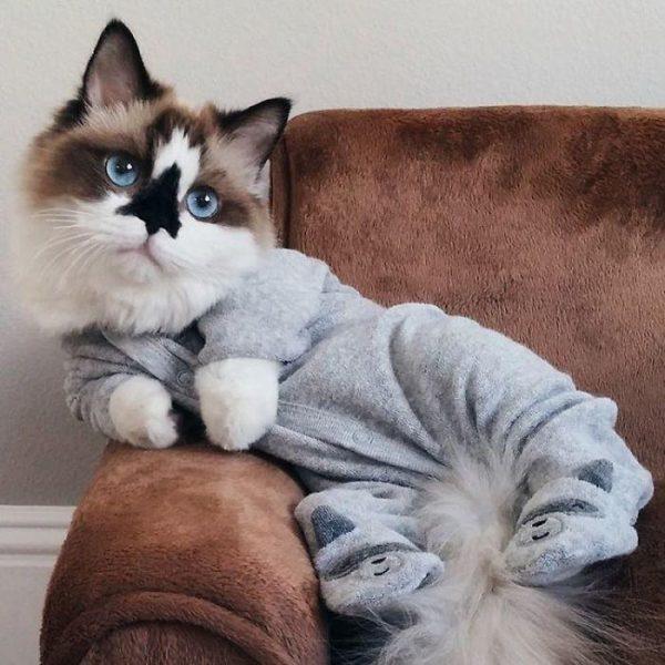 Манчкин на диване