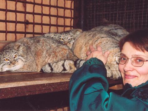 Манул с сотрудницей зоопарка