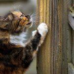 Метки кота на территории