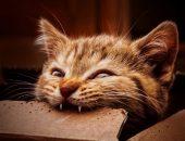молочные зубы у котят