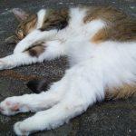 Кот спит на боку