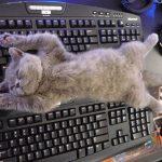 Котёнок спит на клавиатуре