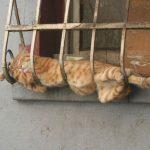 Кошка на решётке балкона
