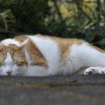 Кот спит на животе