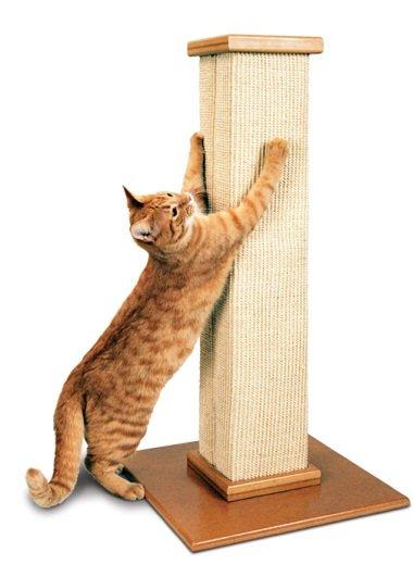 Некоторые коты любят цепляться за вертикальные предметы