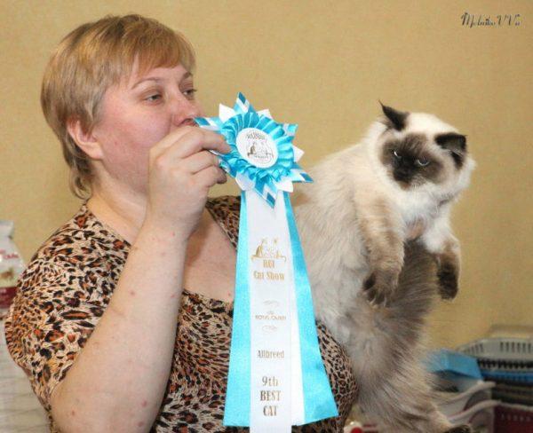 Невская маскарадная кошка с хозяйкой