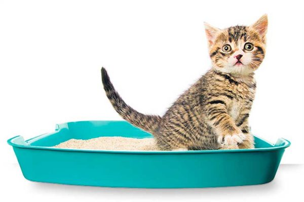 Низкие модели рекомендуются для маленьких котят