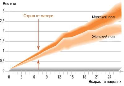 График роста котов и кошек