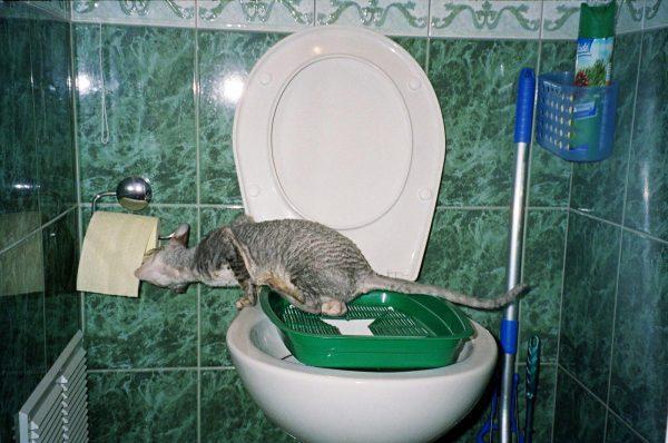 Кошачий лоток на сиденье унитаза