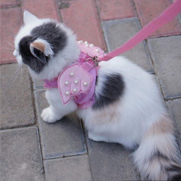 Первая прогулка с котенком