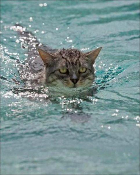 Пиксибоб плывёт
