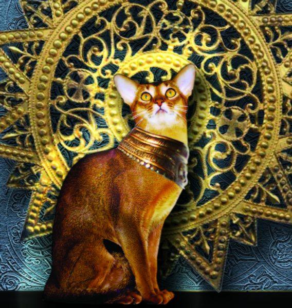 абиссинская кошка в золотом ошейнике