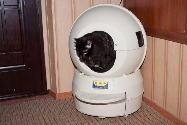 Кошка сидит в автоматическом горшке
