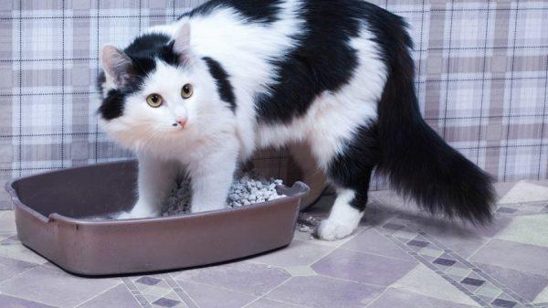 Подбираем горшок для кота
