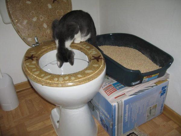 Кошачий лоток, поднятый на уровень сиденья унитаза