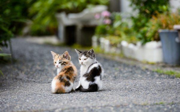 Как определить возраст кошки по внешним признакам — как понять сколько лет коту?