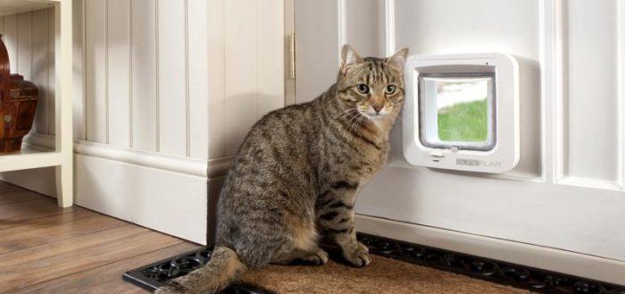 полосатая кошка у кошачьей  дверцы