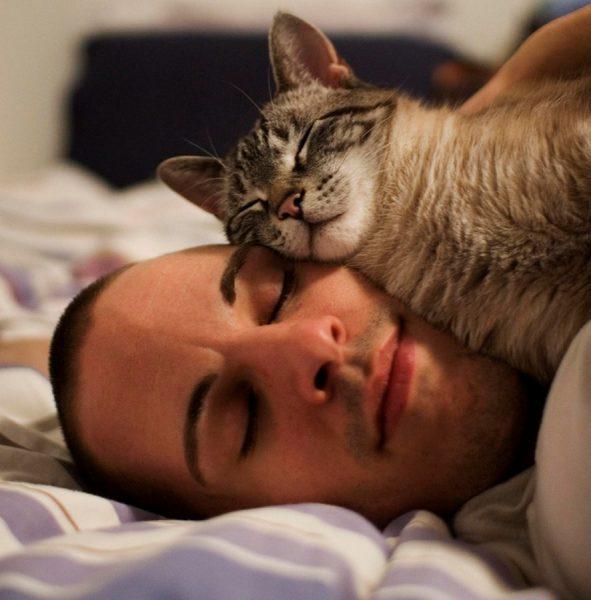 Полосатый кот лежит на хозяине